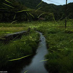 ツインレイ-アイリス神田